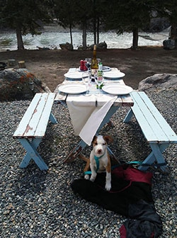 Picnic dog.jpg